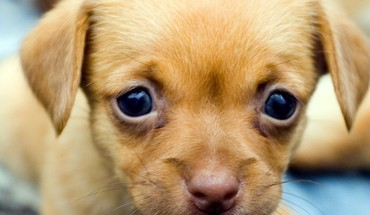 Dogs puppies HD wallpaper