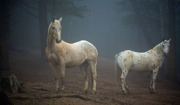 Nature animals horses colorado HD wallpaper