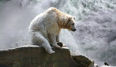 Bear at waterfall HD wallpaper