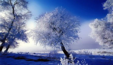 Skyscapes snow trees HD wallpaper