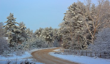 Winter road through the forest HD wallpaper