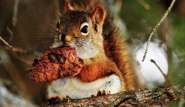 Cute little squirrel HD wallpaper