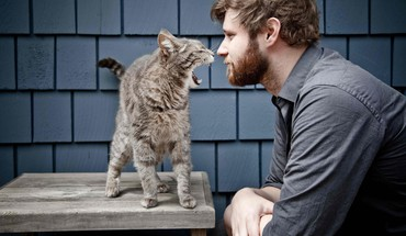 Chats animaux hommes barbe  HD wallpaper