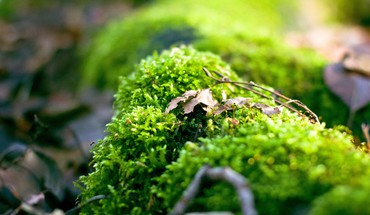 Close-up nature macro HD wallpaper