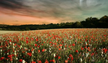 Landscapes flowers skyscapes HD wallpaper