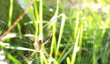 Web spiders HD wallpaper