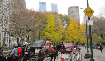 Central Park manhattan new york city paysages urbains usa  HD wallpaper