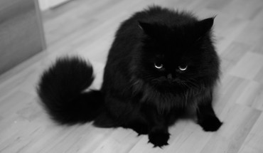 Animals black and white cats eyes fur HD wallpaper