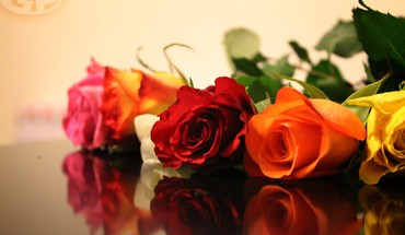 roses Greenpictures  HD wallpaper