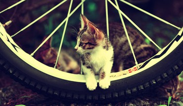 Chats motos roues  HD wallpaper