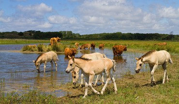 Water grass horses HD wallpaper