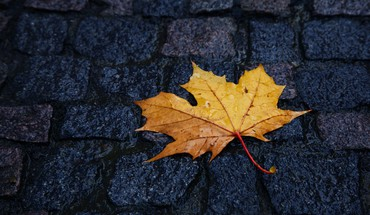 Maple leaf minimalistic roads stones HD wallpaper