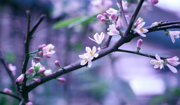 Flowers macro trees HD wallpaper