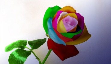 Multicolor flowers HD wallpaper