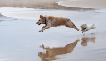 Animals dogs speed HD wallpaper