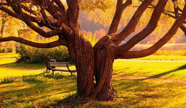 Grass love nature trees HD wallpaper