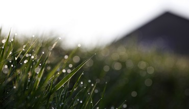 Bokeh grass landmark landscapes nature HD wallpaper