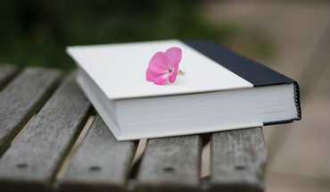 Bench books pink flowers HD wallpaper