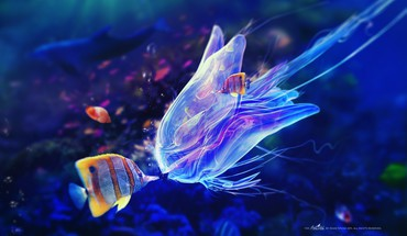 Adam spizak artwork blue fish jellyfish HD wallpaper