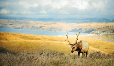 Animals elk landscapes HD wallpaper