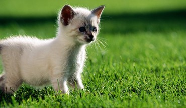 Animals curious grass kittens HD wallpaper