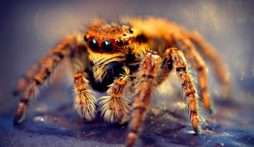 Omg horror spiders tarantula HD wallpaper