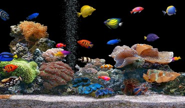 économiseurs d'écran plantes de poissons d'aquarium  HD wallpaper