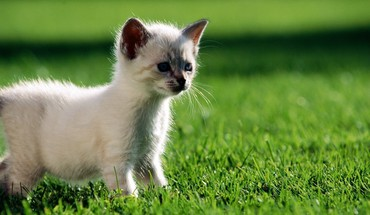 Animals cats grass kittens nature HD wallpaper