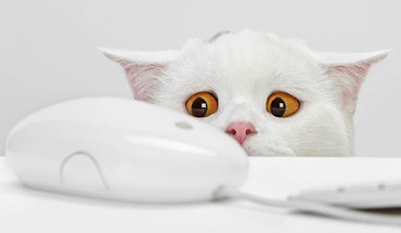 Funny cat face HD wallpaper