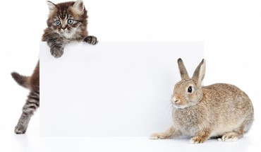 Animals cats rabbits white background HD wallpaper
