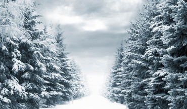 Forests landscapes roads snow trees HD wallpaper