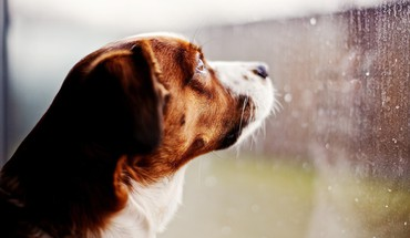 Animals dogs nature rain HD wallpaper