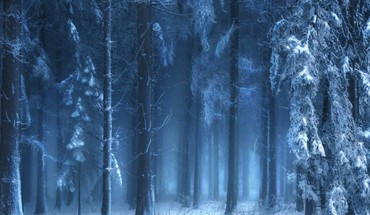 Mysterious forest in winter HD wallpaper