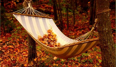 Leaves asleep HD wallpaper