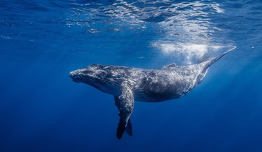 Animals whales sea life HD wallpaper