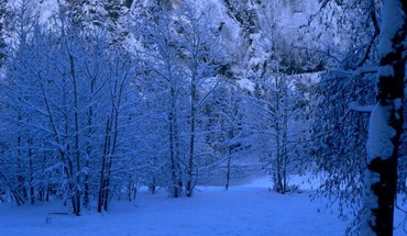 Truly blue winter HD wallpaper