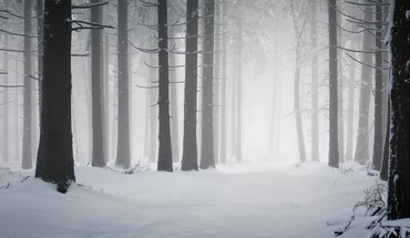 Snowy forest colorado HD wallpaper