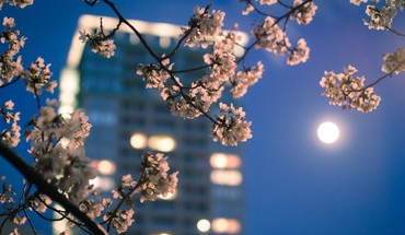 Blossoms blurred bokeh nature skyscrapers HD wallpaper