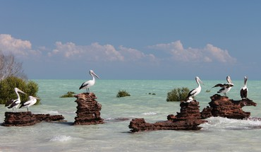Animals beaches birds pelicans sea HD wallpaper