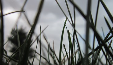Grass skyscapes HD wallpaper