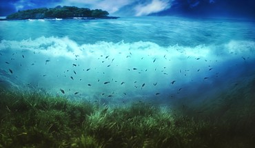 Fish islands seaweed splitview underwater HD wallpaper
