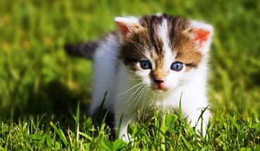Animals baby kittens HD wallpaper