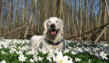 Animals dogs nature white flowers HD wallpaper
