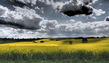 skyscapes Nuages ​​paysages de nature champ jaune  HD wallpaper