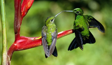 Hummingbird kiss HD wallpaper