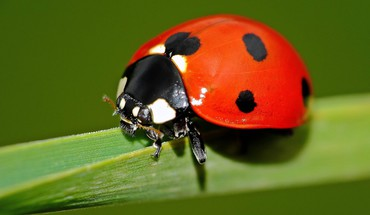 Closeup insects ladybirds HD wallpaper