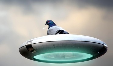 Ufo birds photo manipulation pigeons HD wallpaper