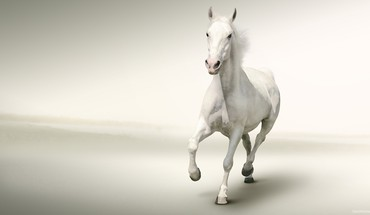 Water running white horse HD wallpaper