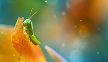Grasshopper macro multicolor nature HD wallpaper
