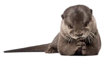 Playful otter pup HD wallpaper